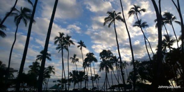 Palm trees on the Hilton Hawaiian Village beach. Credit: Johnny Jet