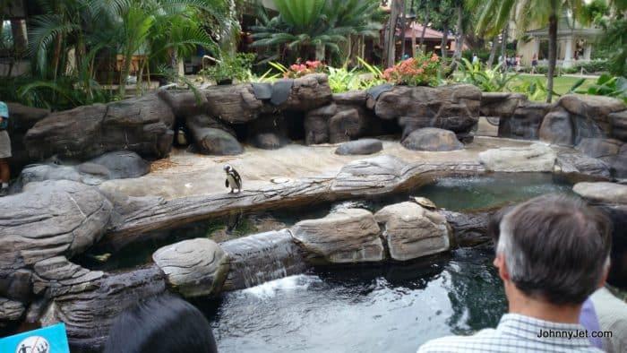 Hilton Hawaiian Village Hawaii Feb 2014 -037