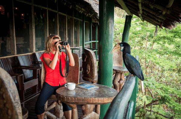 """""""Birdwatching """" at Karawari Lodge"""