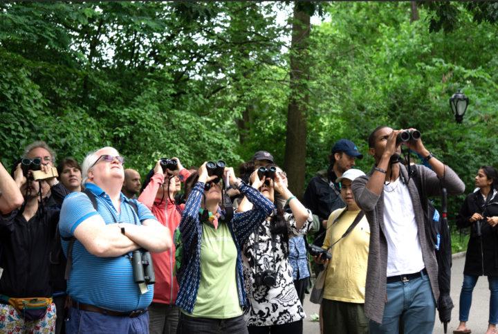 Audubon tour (Credit: NYC Audubon)