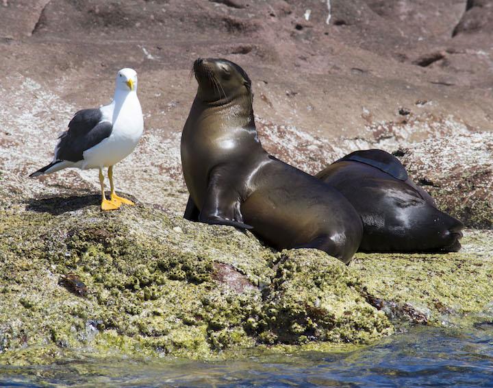 Sea lion sunbathing on Isla Espiritu Santo (Credit: La Paz Tourism)