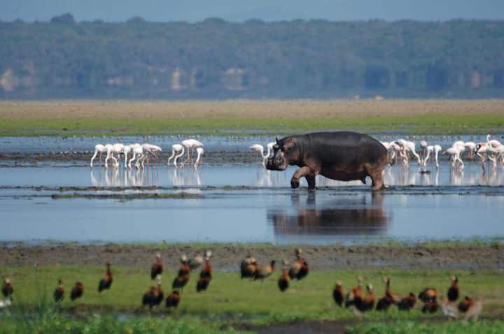 Wildlife in iSimangaliso (Credit: Durban Tourism)