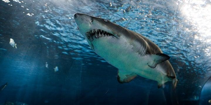 This tool maps great white shark sightings in Massachusetts