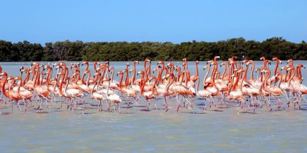 Flamingos at Celestun
