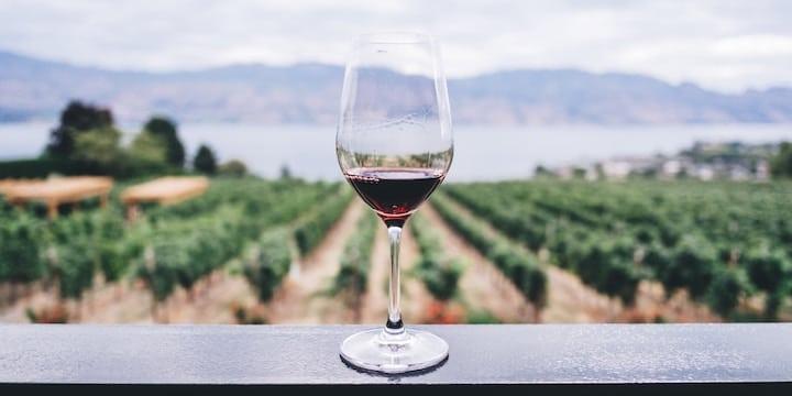 Wine Flies Free